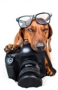 cane-con-macchina-fotografica